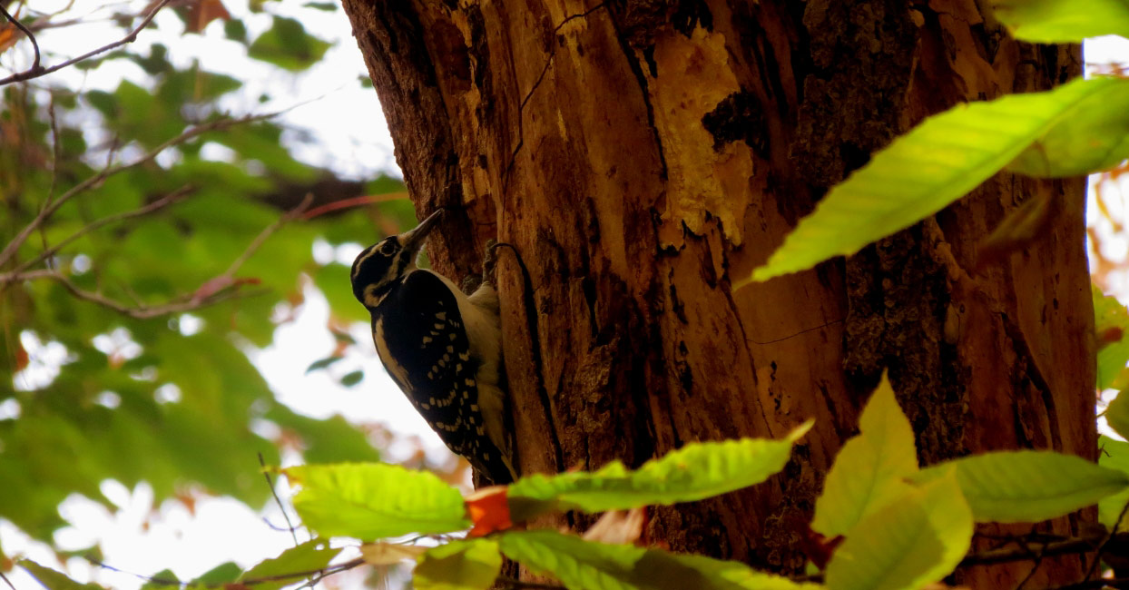 Wood Pecker in Natural Reserve