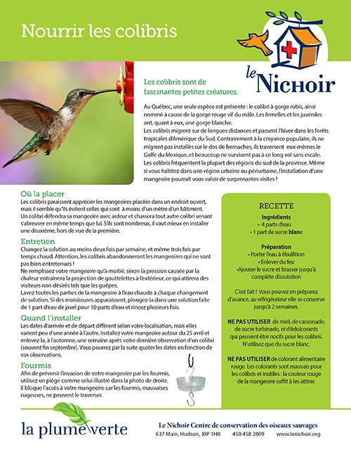 Affiche informative sur comment nourrir des colibris