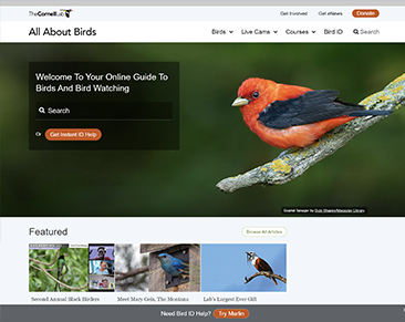 All about Birds website screenshot