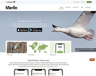 Merlin website screenshot