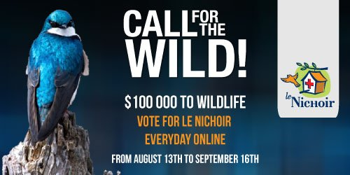 Call for the Wild!